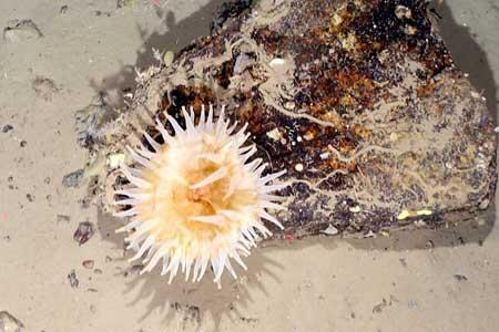 کشف موجودات دریایی که 50 سال زیر یخ پنهان بودند